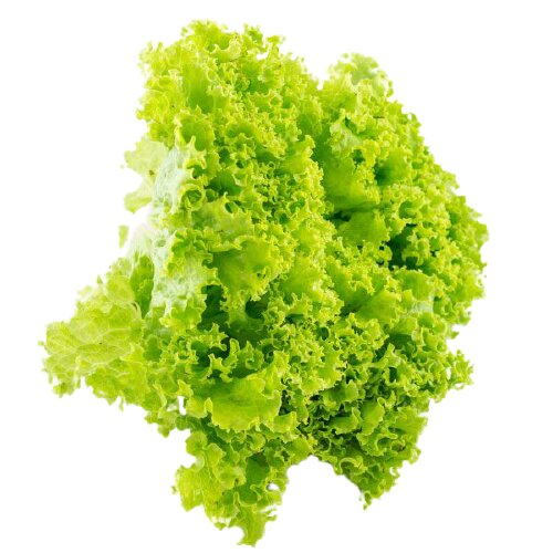 lechuga-crespa-verde-organica